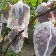 Сетка на виноград фото