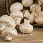 Ciuperci in Moldova фото