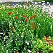 Устройство цветников и клумб №36 фото