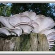 Декоративное грибоводство фото