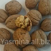Реализация на экспорт грецкого ореха фото