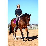 Катание на лошадях, уроки верховой езды фото