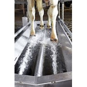 Гидродинамическая ванна для копыт КРС фото