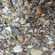 Ракушка морская дробленая крупная в мешках фото