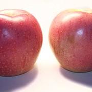 Яблоки Фуджи красный фото