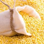 Кукуруза фуражная фото
