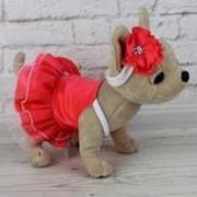 """Платье """"Тропикано"""" для собачки чи чи лав (обычной) фото"""