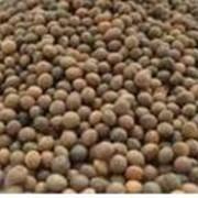 Закупка семян сои фото