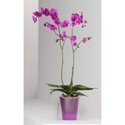 Кашпо для орхидеи Lina фото