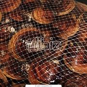 Моллюски фото