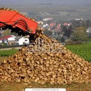 Выращивание пшеницы, ячменя, кукурузы, подсолнуха и сахарной свеклы фото
