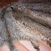 Мех камышовой кошки фото