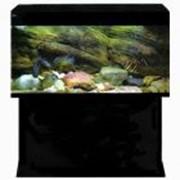 Прямоугольные аквариумы :: Стандарт-400 фото