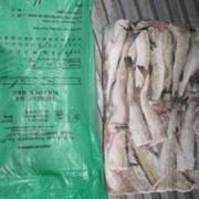 Поставка рыбной продукции Дальневосточного региона России: Минтай фото