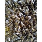 Пчелопродукты фото