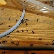 Услуги по уничтожению мурашей фото