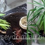 Уход за растениями (дог.) фото
