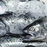 Доставка рыбопродукциии фото