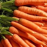 Морковь в Казахстане фото