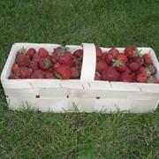 Евротара из шпона, Тернопольская область, Иване-пусте, Тара для ягод, ЧП, купить Евротара из шпона, заказать Украина фото