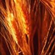 Продаю действующую агрофирму в Херсонской области фото