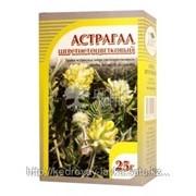 Астрагал шерстистоцветковый, трава 25 гр фото
