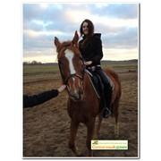 Конная прогулка на спокойных и красивых лошадях фото