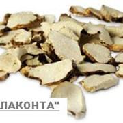 Диоскорея кавказкая фото