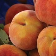 Разработки выращивания персиков фото