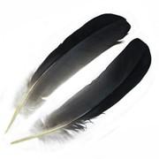 Маховые перья фото