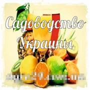 Садоводство Украины фото