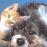 Услуги парикмахерские для животных фото