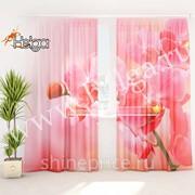 Розовые орхидеи арт.ТФТ1993-h275 (145х275-2шт) фототюль (штора Шифон ТФТ) фото
