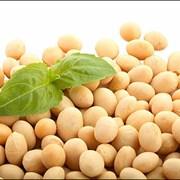 Соевые бобы (соя, семена сои) фото