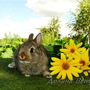 Цветной карликовый кролик фото