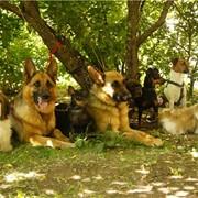 Собаки для съемок фото