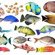 Аквариумные рыбки фото