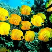 Оформление аквариумов фото