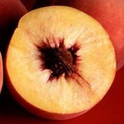 Персики урожай 2013 фото
