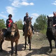 Конные прогулки, Конные прогулки Киев фото