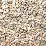 Ядро семян подсолнечника масличные сорта оптом от 500тн фото