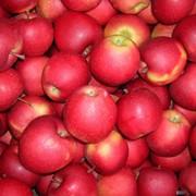 Поставка польских яблок фото
