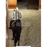 Конные туры и конные прогулки фото