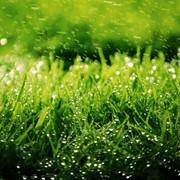 Скарификация газона фото