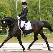 Лошади хобби класса Мерин ПОХВАЛ фото