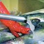 Хранение и переработка рыбной продукции фото