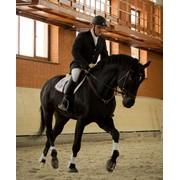 Навыки верховой езды. Лошадь напрокат. Прокат лошадей. Иппотерапия. Общение с животными. Рекреация и реабилитация вызванная стрессами и пассивным образом жизни. Повышение самооценки. фото