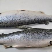 Рыба Лосось ПСГ 4-5 Чили индастриал А фото
