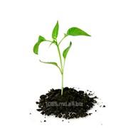 Средства защиты растений. Защита растений. фото