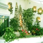 Озеленение офисов и фитодизайн помещений фото